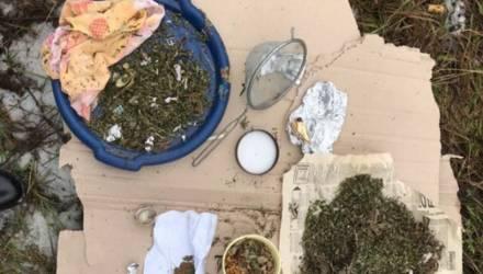 У жителя Гомельской области в туалете обнаружили 245 граммов марихуаны