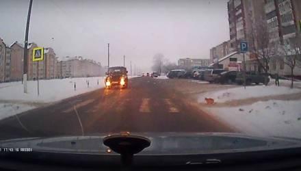 Белорусский кот дождался, пока водители остановятся перед пешеходным переходом, а затем перешёл дорогу по Правилам