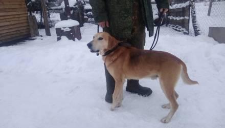 Белорус повесил чужую охотничью собаку за задушенную курицу
