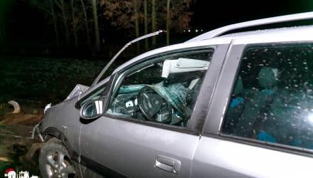 Возле пущи в Гродненской области два автомобиля насмерть сбили зубра