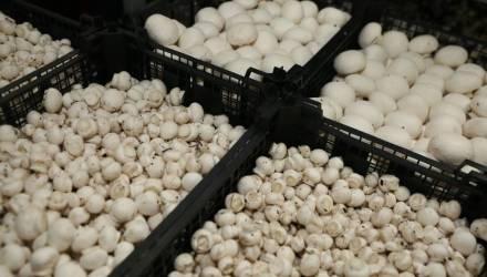 Более 16 тонн шампиньонов, которые следовали из Гомельской области, утилизировали на Брянщине