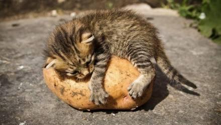 Картошечку ещё можно успеть купить! На площади Восстания в Гомеле продолжат работать ярмарки выходного дня