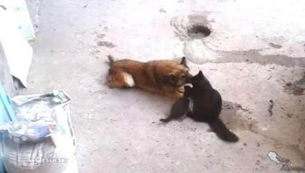 Трогательное видео: что такое настоящая дружба, даже если вы кошка и собака
