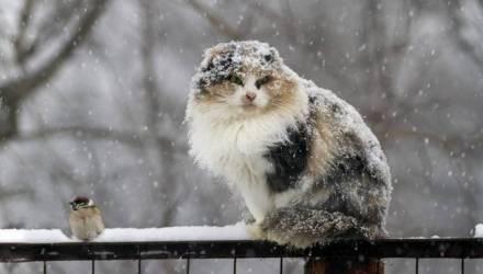 Зима ещё вернётся. Синоптики о том, какой будет погода на предстоящей неделе в Гомеле