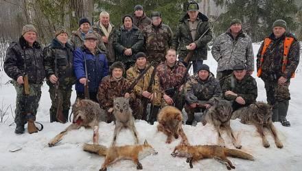Волки всё чаще стали забредать в белорусские деревни