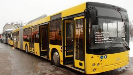В Осовцы пойдут сразу несколько автобусов по новым маршрутам