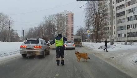 Видеофакт: инспектор ДПС остановил движение, чтобы хромая собака перешла дорогу