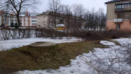 Под Гомелем производили санитарную обрезку деревьев. Местные возмутились качеством работ