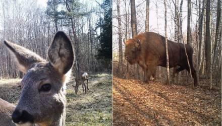 В Чернобыле есть жизнь: учёные показали, какие животные обитают в зоне отчуждения