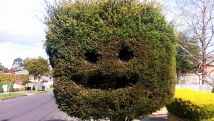 «Смешной кустик»: житель Речицы нашёл коноплю, покурил — прокурор спросил, понравилось ли?