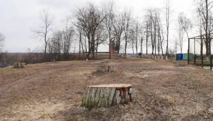 Кругом одни пеньки. Жители Петрикова жалуются, что в парке и на площади вырубили около ста деревьев