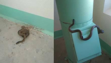 «Скоро змеи заведутся». Белоруска вынесла на лестничную клетку рептилию, чтобы убрали в подъезде