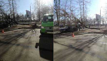 Повреждённые авто, сорванные крыши, поваленные деревья и билборды. Сильный ветер доставил жителям Гомельщины много неприятностей