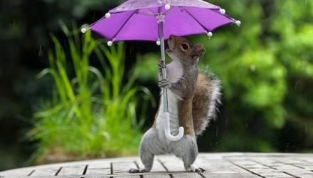 Ветрено и дождливо. Погода в Гомеле на неделю