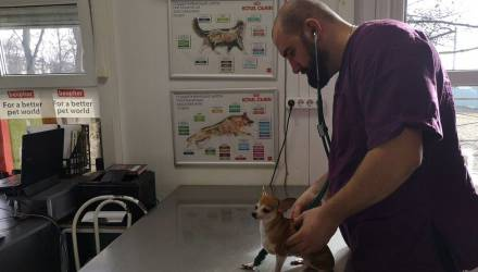 Гомельский ветеринар развеял самые популярные мифы о домашних питомцах