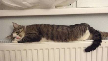 """Стало известно, при какой температуре в квартире сделают перерасчет за отопление в """"жировке"""""""
