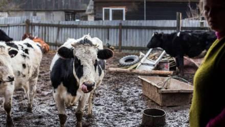 Замкнутый круг. История Людмилы, её шести коров и трёх телят, которые мешают деревне и властям