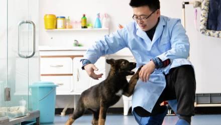 Фото: Первая клонированная полицейская собака в Китае. Она приступила к тренировкам перед началом службы
