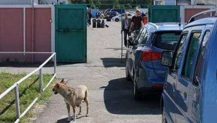 """МВД запустило новый сайт, на котором можно """"пробить"""" автомобиль по VIN"""