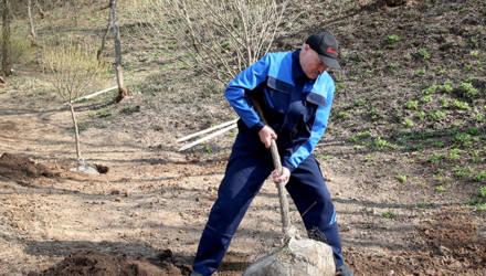 «Рекомендовано на добровольной основе». 20 апреля белорусов ждут на республиканском субботнике