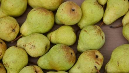 Россельхознадзор с 12 апреля запрещает ввоз яблок и груш из Беларуси