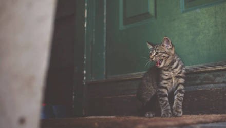 В Беларуси кошка спасла на пожаре человека, но сама погибла