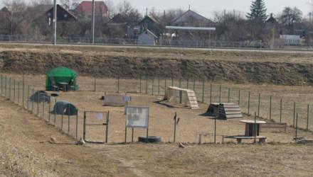 Собачье дело: инициатива гомельчанина превратилась в площадку для выгула питомцев