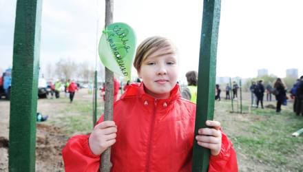 В Гомеле заложили парк семейных деревьев: высадили более 20 саженцев клёнов