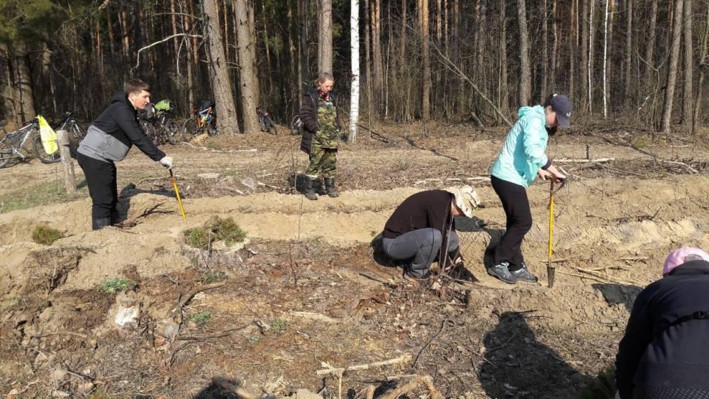 Гомельские велосипедисты приняли участие в посадке леса под Зябровкой (фото)