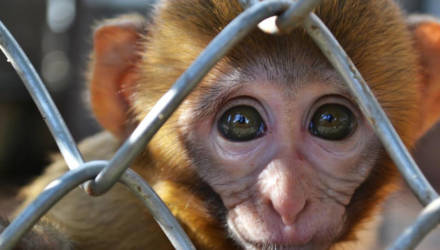 В Бобруйском передвижном зоопарке посетителям показывают больных животных. Выставка успела побывать и в Гомеле