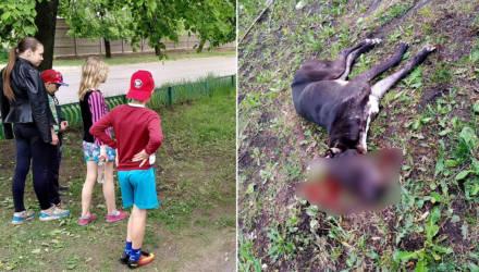 В Бобруйске питбуль «порвал» пятерых человек. Среди них – 5-летний ребёнок (18+)