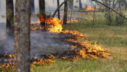 В Гомеле и пяти районах области вновь введён запрет на посещение леса