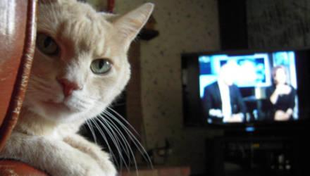 Мининформ выдал разрешение на вещание 6 иностранным каналам