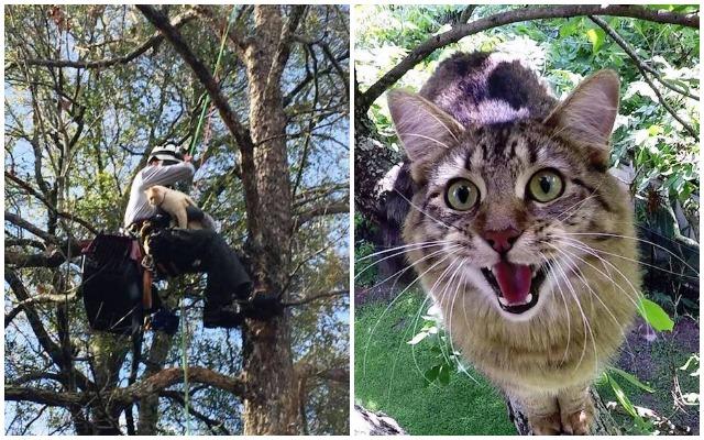 Пенсионер уже несколько лет бесплатно снимает кошек с деревьев