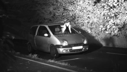 В Германии голубь спас водителя от штрафа за превышение скорости