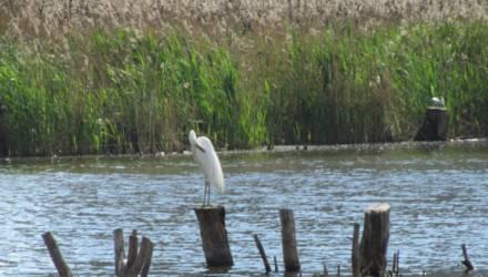 Фотофакт: в Гомеле в озере среди многоэтажек поселилась белая цапля