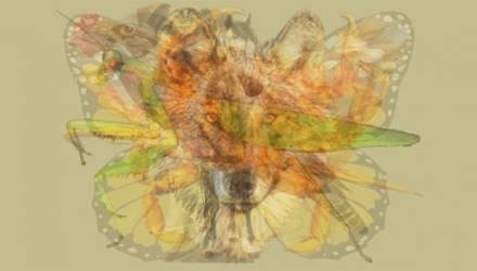 Тест: Животное, которое вы увидите первым, раскроет ваши главные черты характера