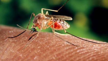 Чью кровь предпочитают комары и как от них избавиться