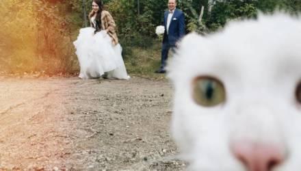 За каких иностранцев выходят замуж девушки на Гомельщине