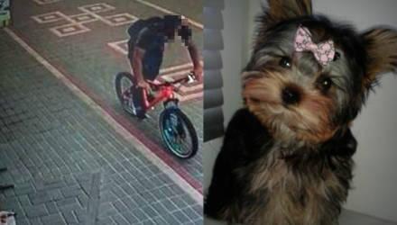 В Гомеле велосипедист задавил собаку. Кто прав, а кто виноват?