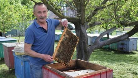 Пчеловод Сергей Миронов из агрогородка под Гомелем: Главное – чтобы пчелосемьи были заняты работой