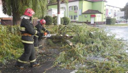 В Мозыре сильный ветер во время дождя повалил деревья на дороги. К счастью, пострадавших нет