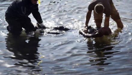 За один день на Гомельщине утонули два человека. Ещё один – днём ранее