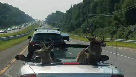 Иногда олень за рулём не самое необычное, что встречается на дороге: 15 фото
