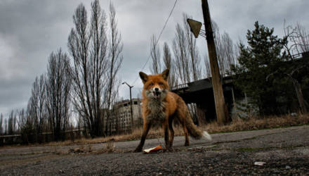 Заражённое мясо развозили по всей стране. Факты о Чернобыле, которые должен знать каждый