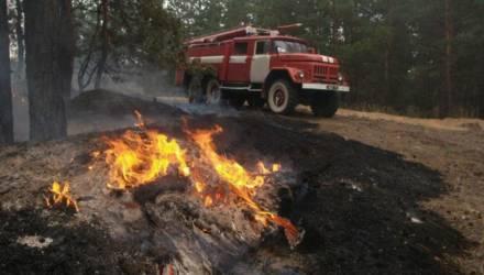 Запрет на посещение лесов введён уже в 13 районах Гомельской области
