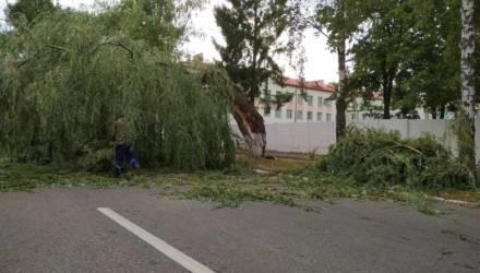 В Гомеле, Ветковском и Речицком районах сегодня утром бушевала стихия: поваленные деревья и столбы, разрушенные крыши, двухсантиметровые градины