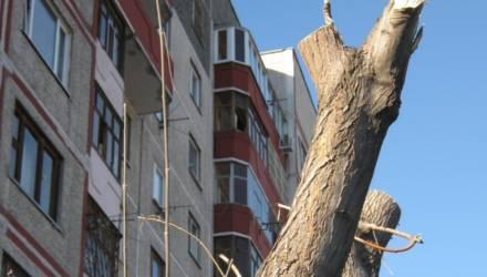 """Гомельчанка: """"Вырубили дерево под окном. Как компенсируют?"""""""
