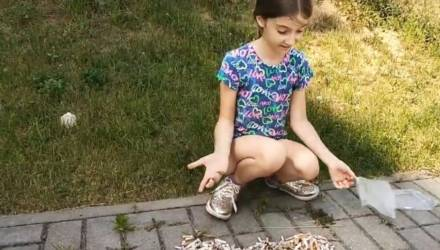В Беларуси маленькая девочка собрала под окнами многоэтажки окурки жильцов – и показала им, сколько это мусора