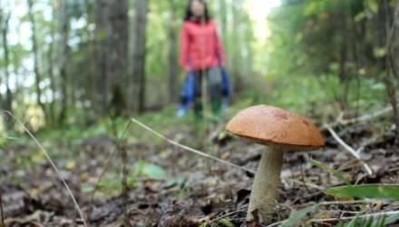 Ушли за грибами и заблудились. На Гомельщине нашли потерявшихся в лесу маму с сыном